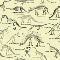 Dinosaur Skeletons Wallpaper & Surface Covering
