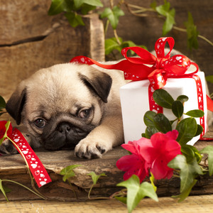 YouCustomizeIt Gifts For Pets